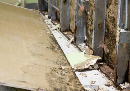 Mold Remediation & Removal Ventura CA